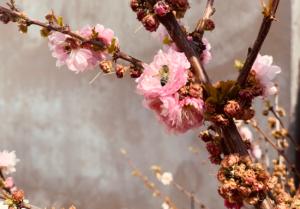 Zu wenig Bienen | Sollten wir nun mehr oder weniger Honig essen?